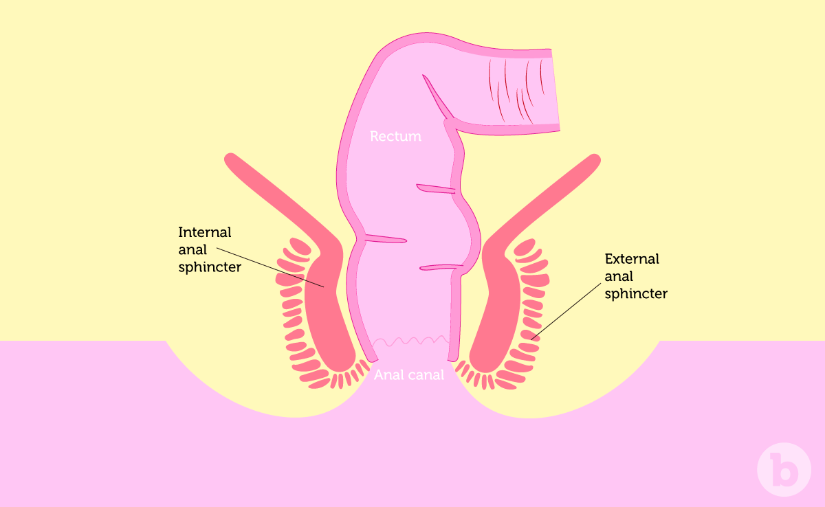 The two types of sphincter muscles around the anus tighten up if anal sex training is not done enough